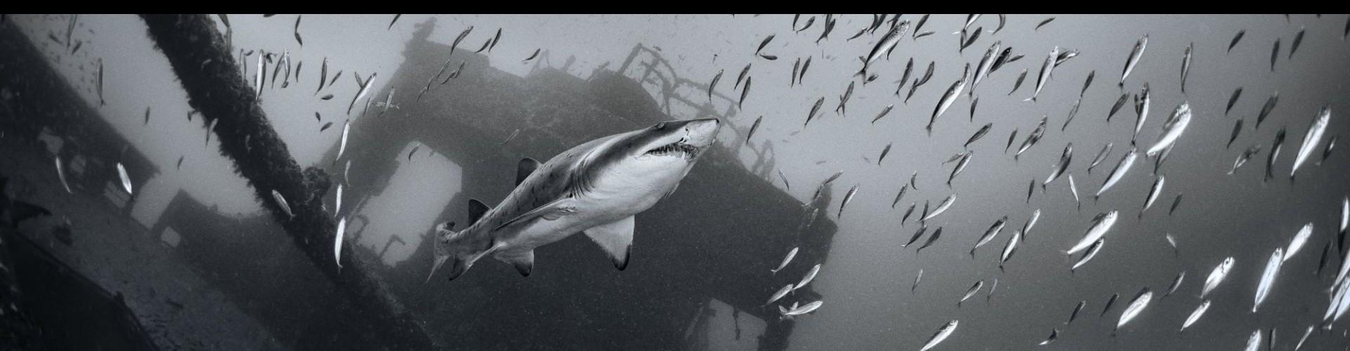 7 - Spar & Shark